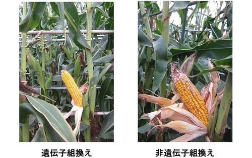 Comparison01_4